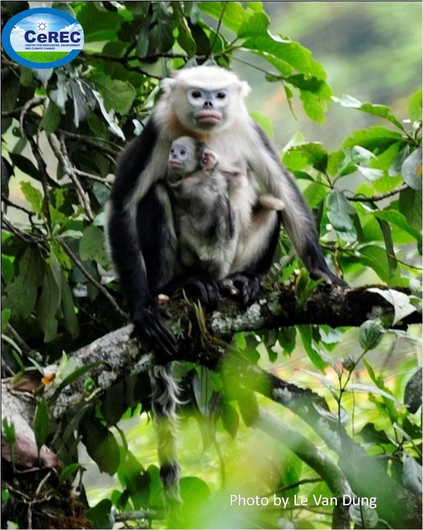 Baby snub nosed monkey